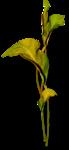 осенние тропинки (43)
