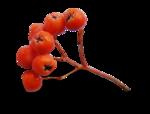 осенние тропинки (46)