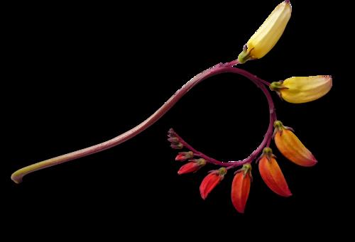 осенние тропинки (49)