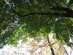Каштан осень игнорирует