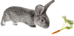 rabbit_7.png
