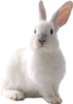 rabbit_13.png