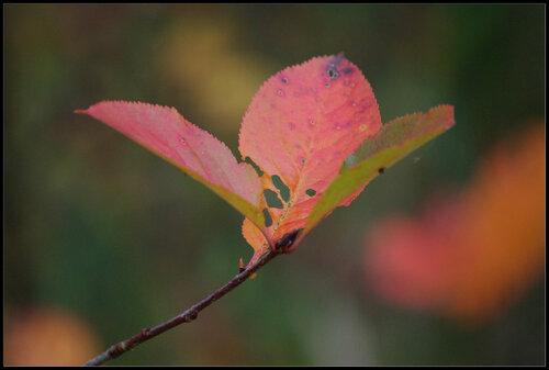 Дача. Синявино. 8 октября  2011.
