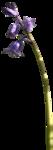 Secret Garden Flower17.png