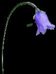 Secret Garden Flower19.png