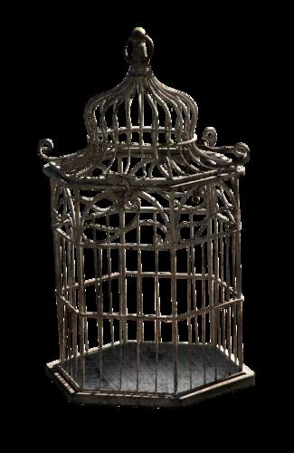 cages oiseaux le paradis d 39 aphrodite. Black Bedroom Furniture Sets. Home Design Ideas