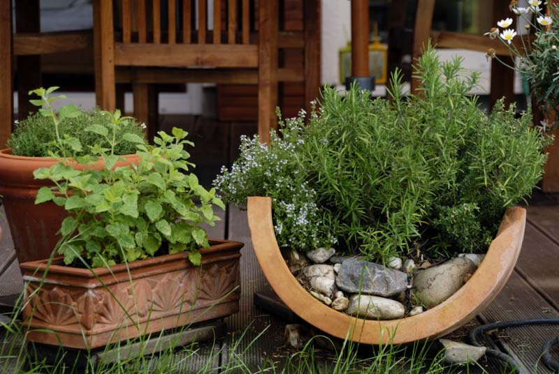 Контейнерное садоводство в фотографиях