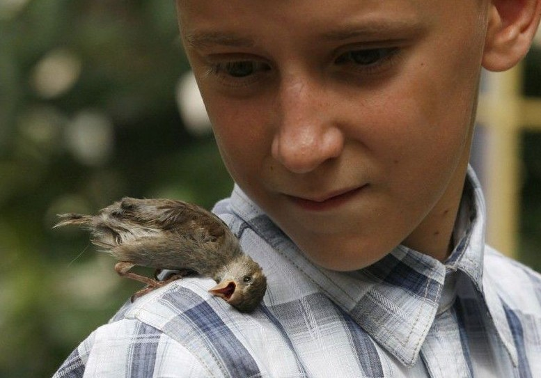 птенец и мальчик