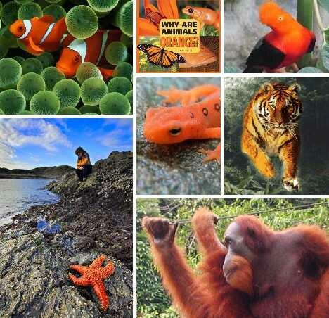 оранжевые животные, самые необычные животные