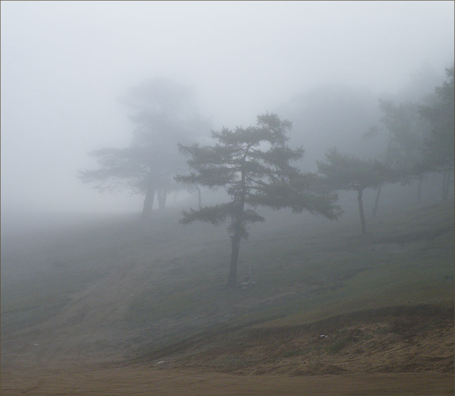 Лес в тумане