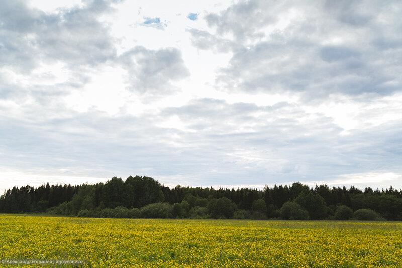Велопрогулка по полям и лесам после дождей =)