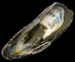морской (44)