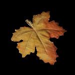 волшебная осень (66)