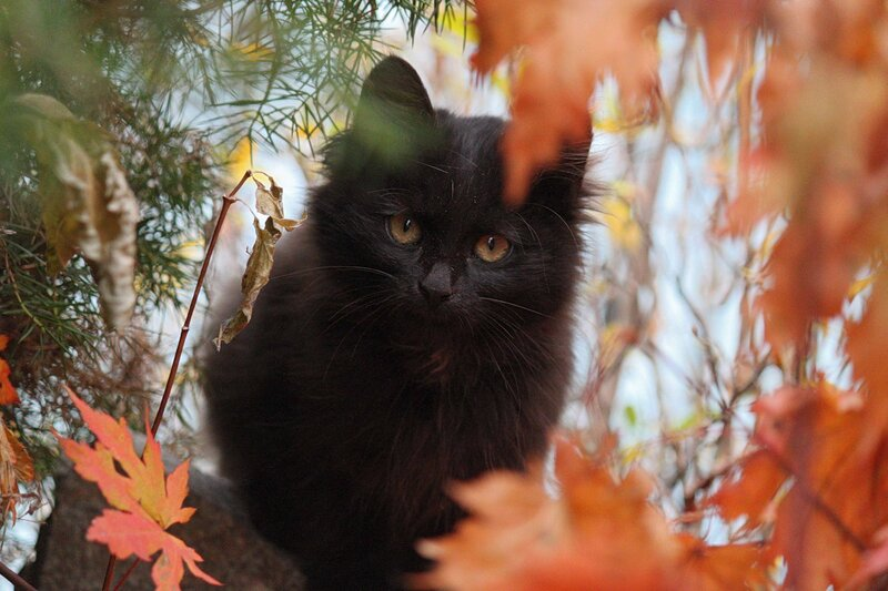 Котенок в Приморской осени.