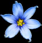 Secret Garden Flower13.png