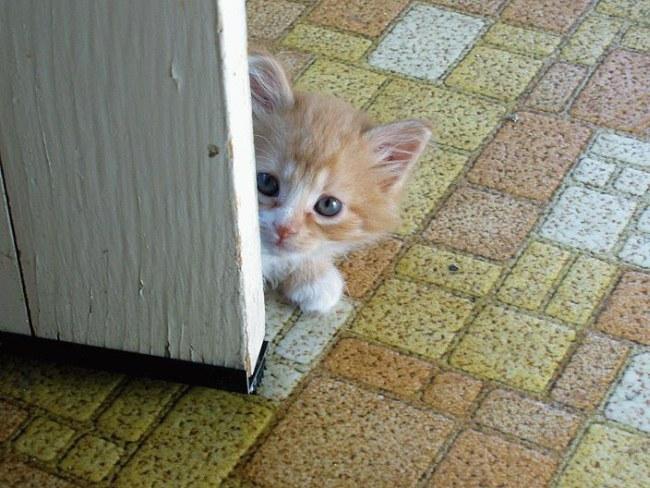 Забавные животные...:) http://img-fotki.yandex.ru/get/5311/130422193.31/0_684de_df953e5a_orig