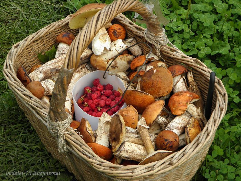 корзина с грибами и малиной1.JPG