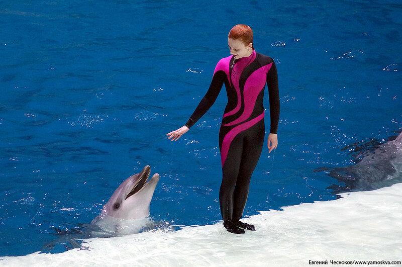 Лето. ВДНХ. Москвариум. Дельфин. 14.08.15.05..jpg