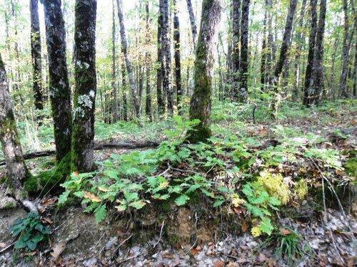 Осень в лес вошла...