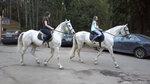 Белая лошадь к удаче