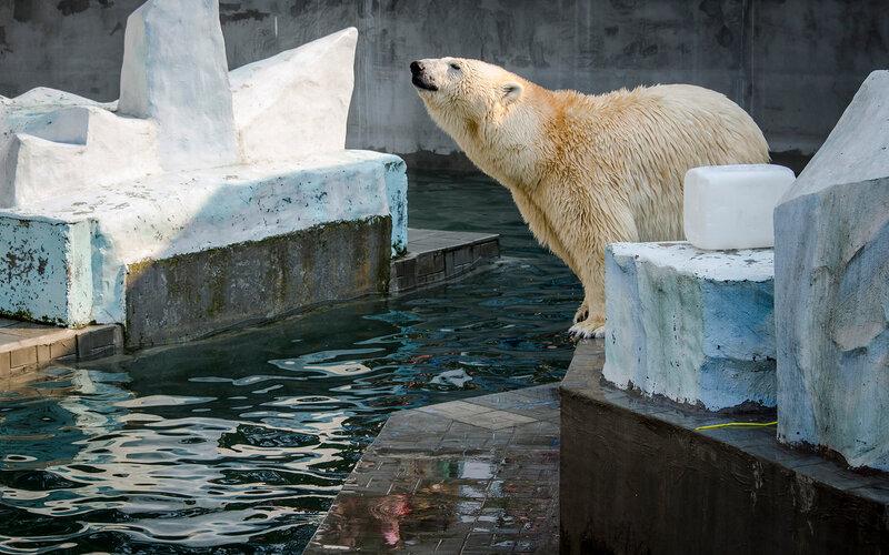 Zoo Novosibirsk.  Ídolo do público - Gerda.