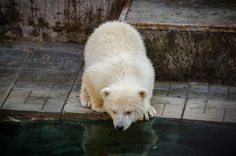 Zoo Novosibirsk.  Mais medo de água!