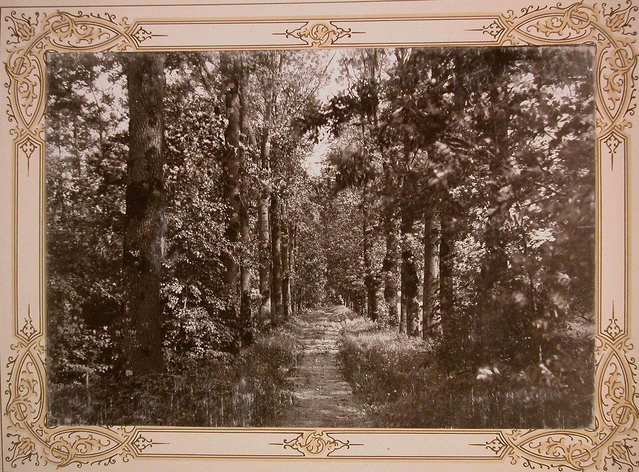 13. Вид одной из аллей институтского парка
