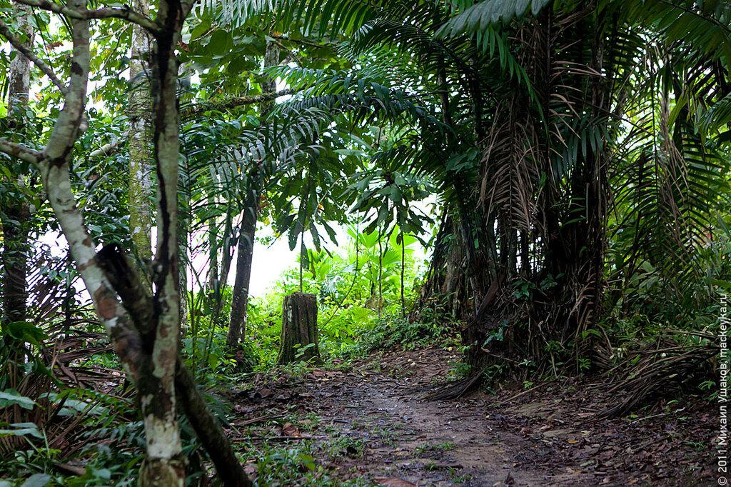 перу джунгли фото уже нашёл
