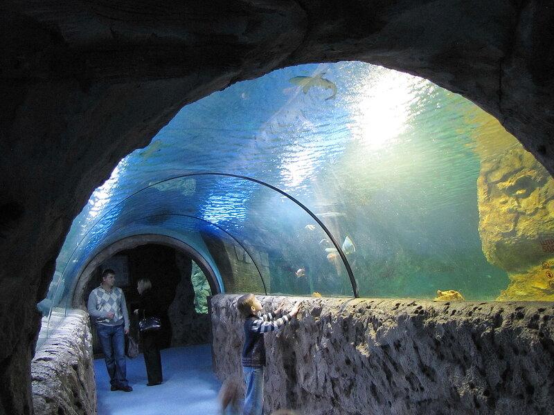 Пингвины, змеи и акулы или океанариум в Москве