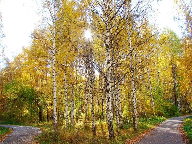 Все дорожки - в Осень....