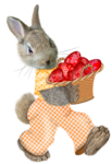 easter rabbit3.png