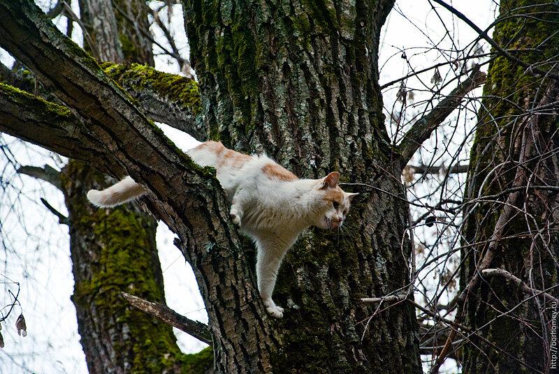 кошка лезет на дерево картинки