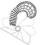 цветок-2-1.jpg