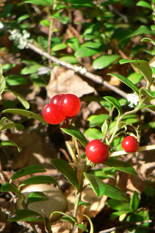 ягоды подружки