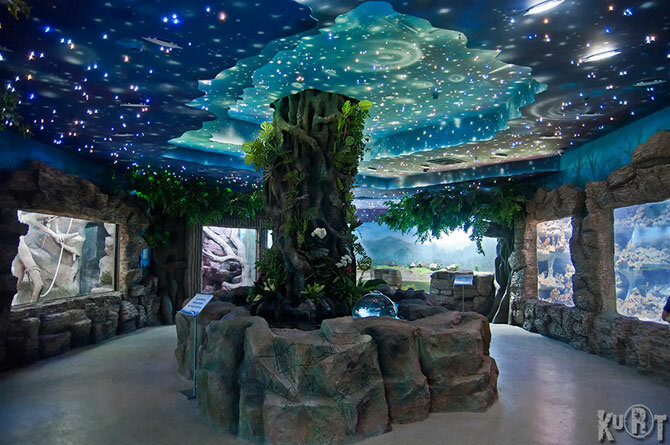 Океанариум в ТЦ Рио Москва