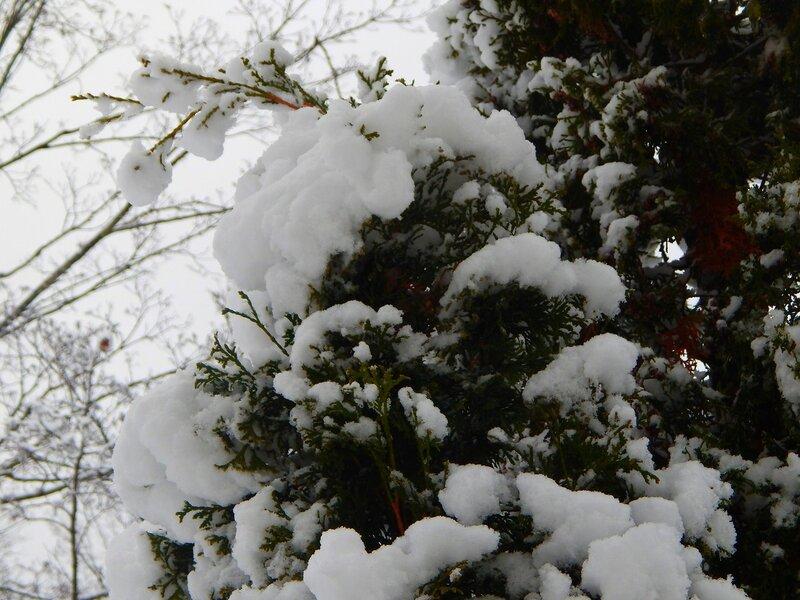 Снег в апреле.