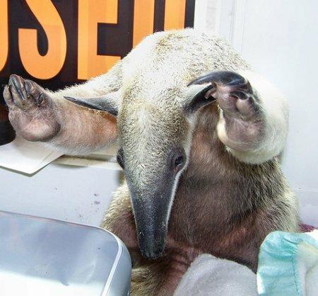 аааааааааааааа!!!! вот это животное!!! оно создано для меня! его нос! нос!!!!!!!!!