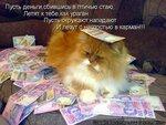 89161951563 тамада ,8916 195 1563 тамада,svadba.ru ,свадьба.ру ,проведение праздника , свадьба .юбилей корпоратива,