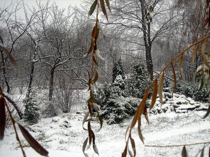 Осень,с.Остров,подворье,первый снег
