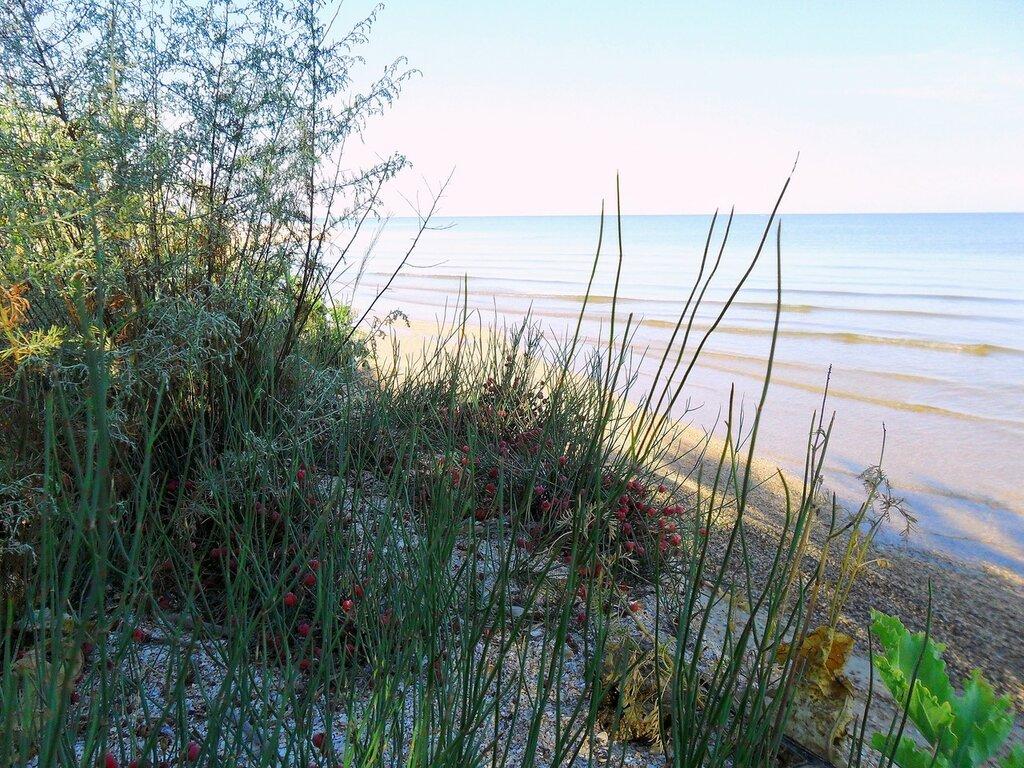 В утренний час, на летнем берегу ... SAM_2313.JPG