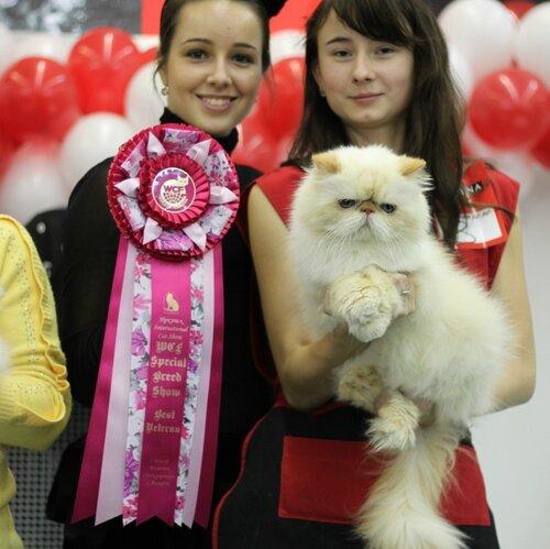 Best Veteran of Breed - 8 Назар (N) PER d 33 Вл. Афанасьева О.Н.,