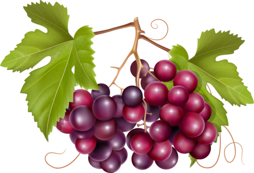 виноград (11).png