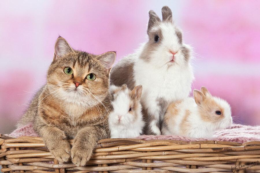 картинки с котятами и крольчатами радости это душевный