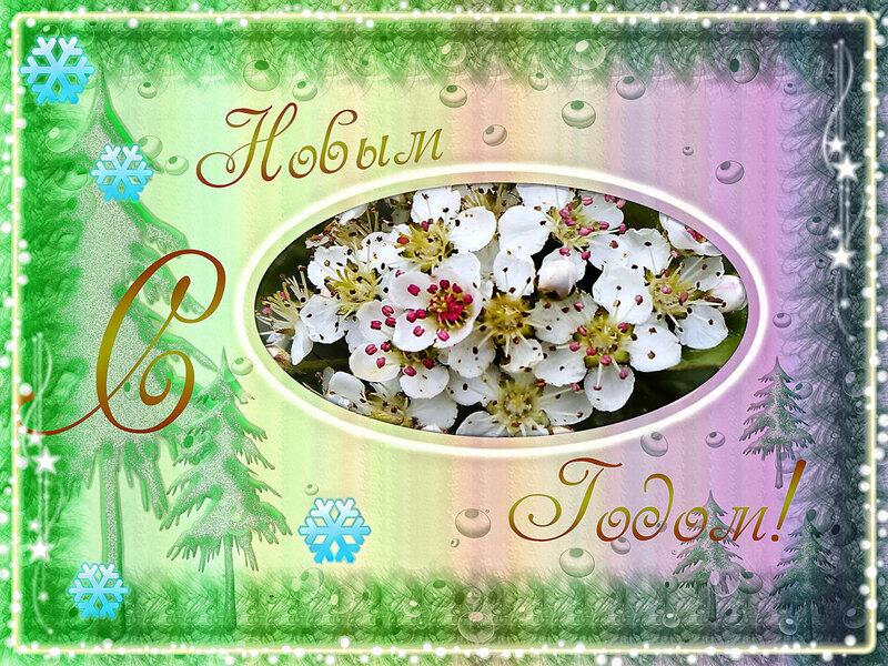 Каталог открыток для форума, надписью счастлива