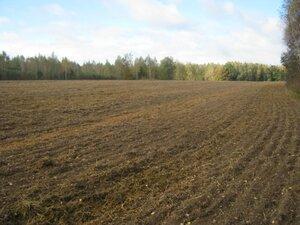 Не все поля зарастают лесом.