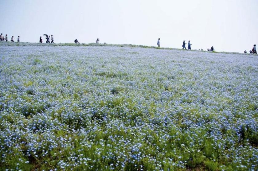 Живописный японский парк Хитати Кайхин 0 1422d0 8e63f9ed orig