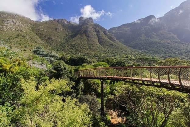 В ботаническом саду Кейптауна построена дорога мост над верхушками деревьев