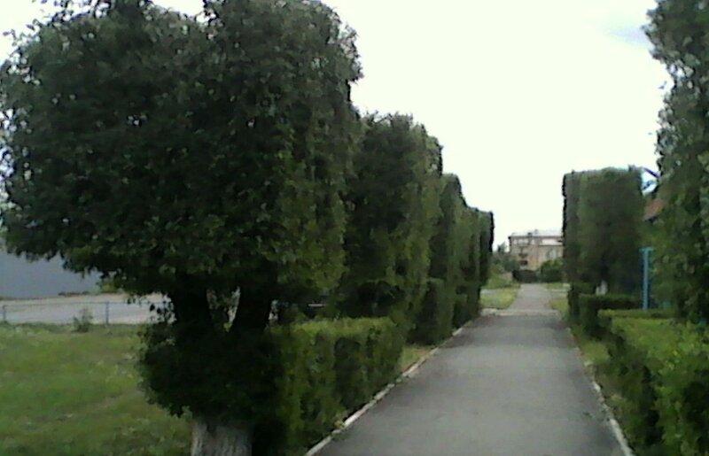 Аллея угловатой зелени