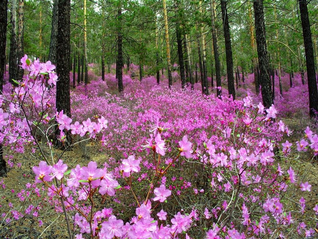 Картинки пейзажи о весне в сибири