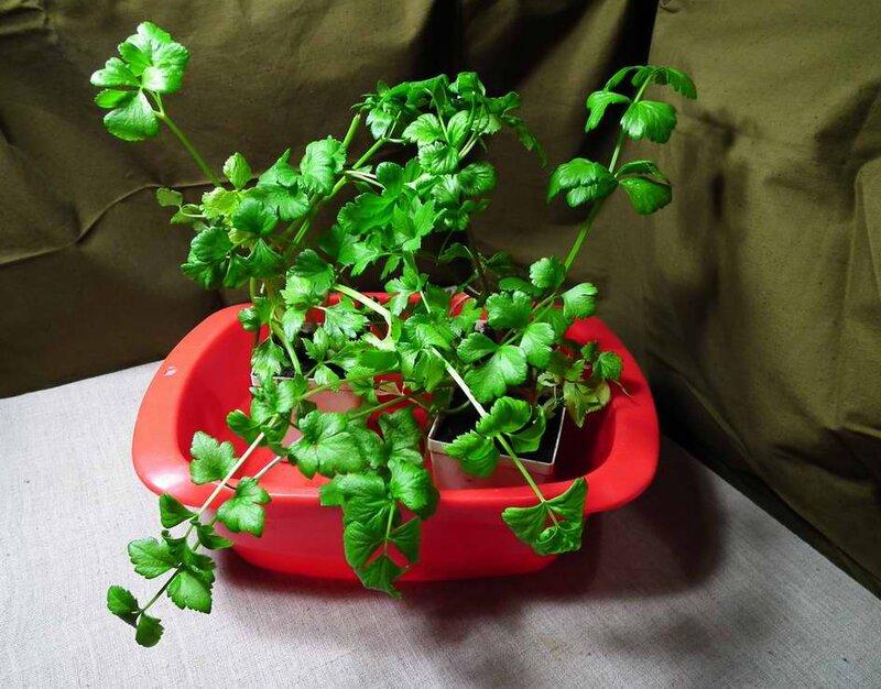 Co najlepiej jest mieć rośliny doniczkowe?